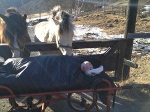 Besudlet av hestene... Fortsatt traumatisert... :)