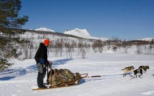 Hundesledetur i Sjunkhatten Nasjonalpark. En fantastisk opplevelse. Foto: Erik Veigård (Sted: Valnesfjord)